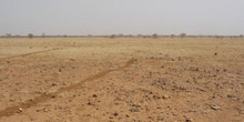 Fight against Desertification